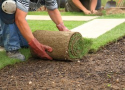 Laying-sod-for-new-lawn-000012697419_Small